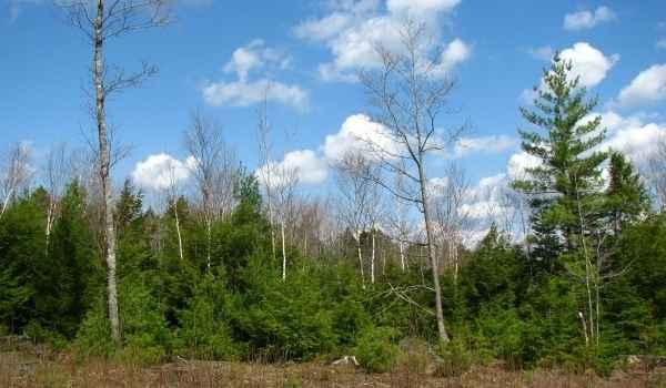 Immobilien Kanada: Baugrundstück in einem Vorort von Bridgewater, Nova Scotia