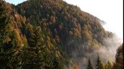 5800 ha Wald zum Verkauf im Landkreis Maramures Rumänien
