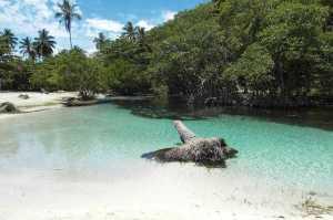 Immobilien Dominikanische Republik  Samaná Grundstück kaufen Laguna del Diablo