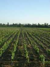 2ha privates Wein Grundstueck in Mendoza Argentinien US$ 96,000 (Finanzierung möglich!) Wine Estate #2